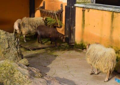 Parque de Cabarceno Cantabria
