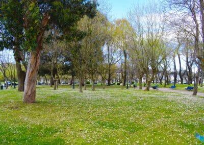 Parque de Mesones margaritas
