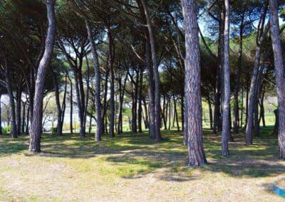 Península de la Magdalena bosques