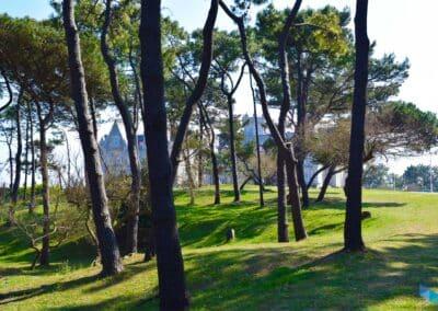 Península de la Magdalena entre arboles