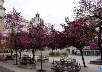 Plaza de las Atarazanas primavera