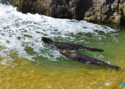 Zoo Península de la Magdalena familia foca