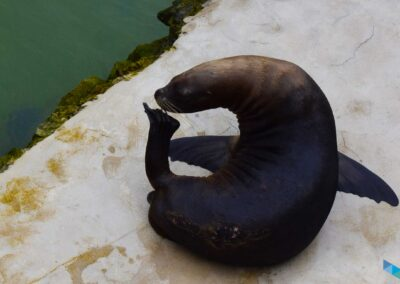 Zoo Península de la Magdalena Foca posando