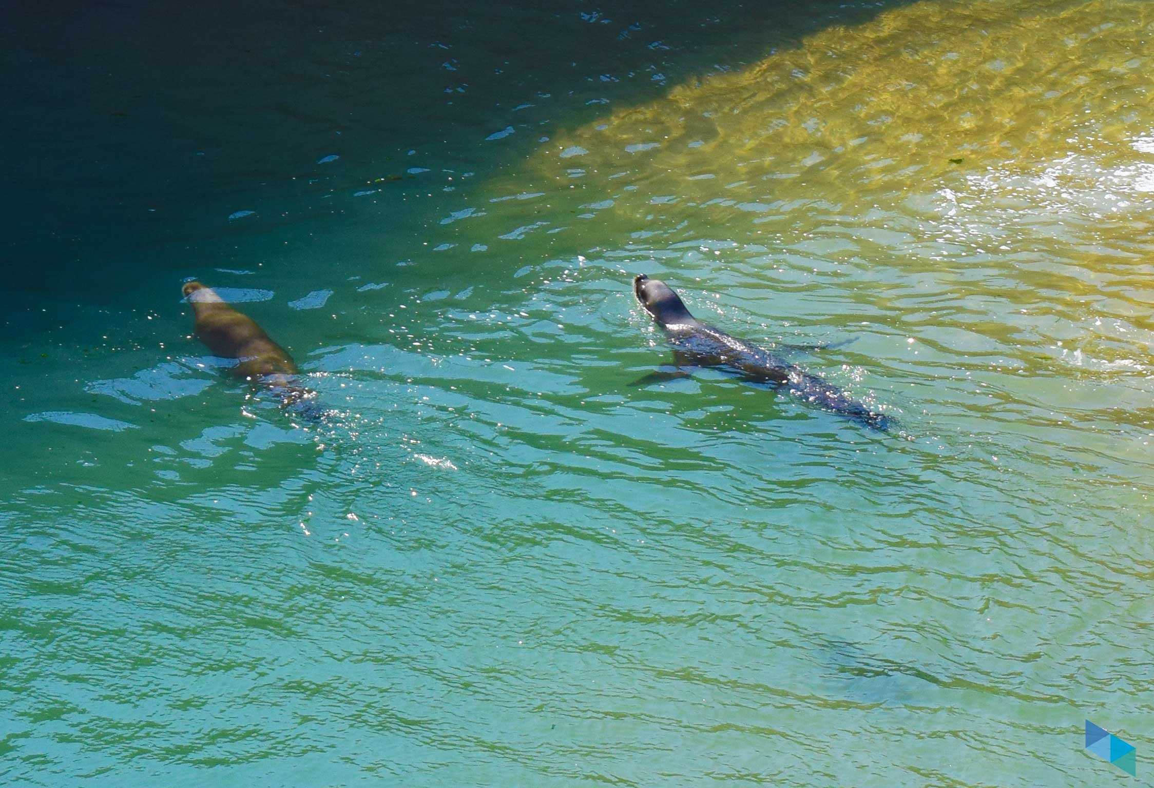 Zoo Península de la Magdalena Focas nadando