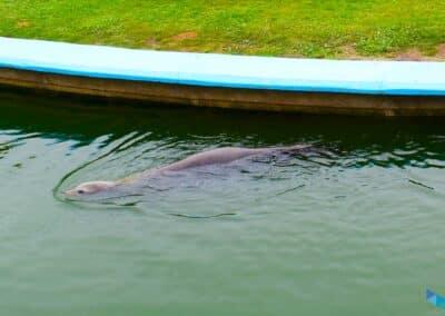 Zoo Península de la Magdalena nueva foca