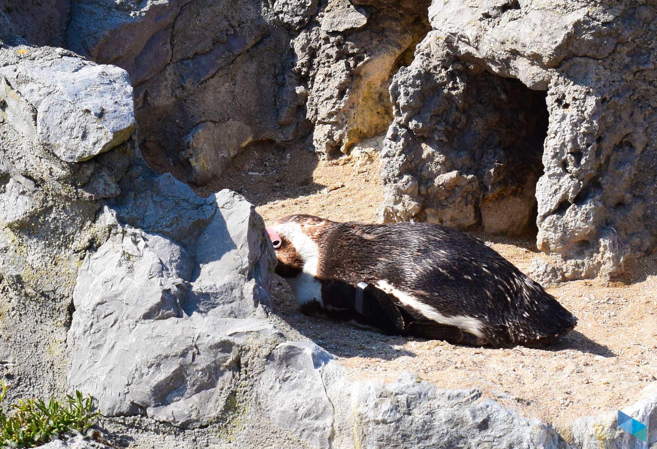 Zoo Península de la Magdalena pinguino