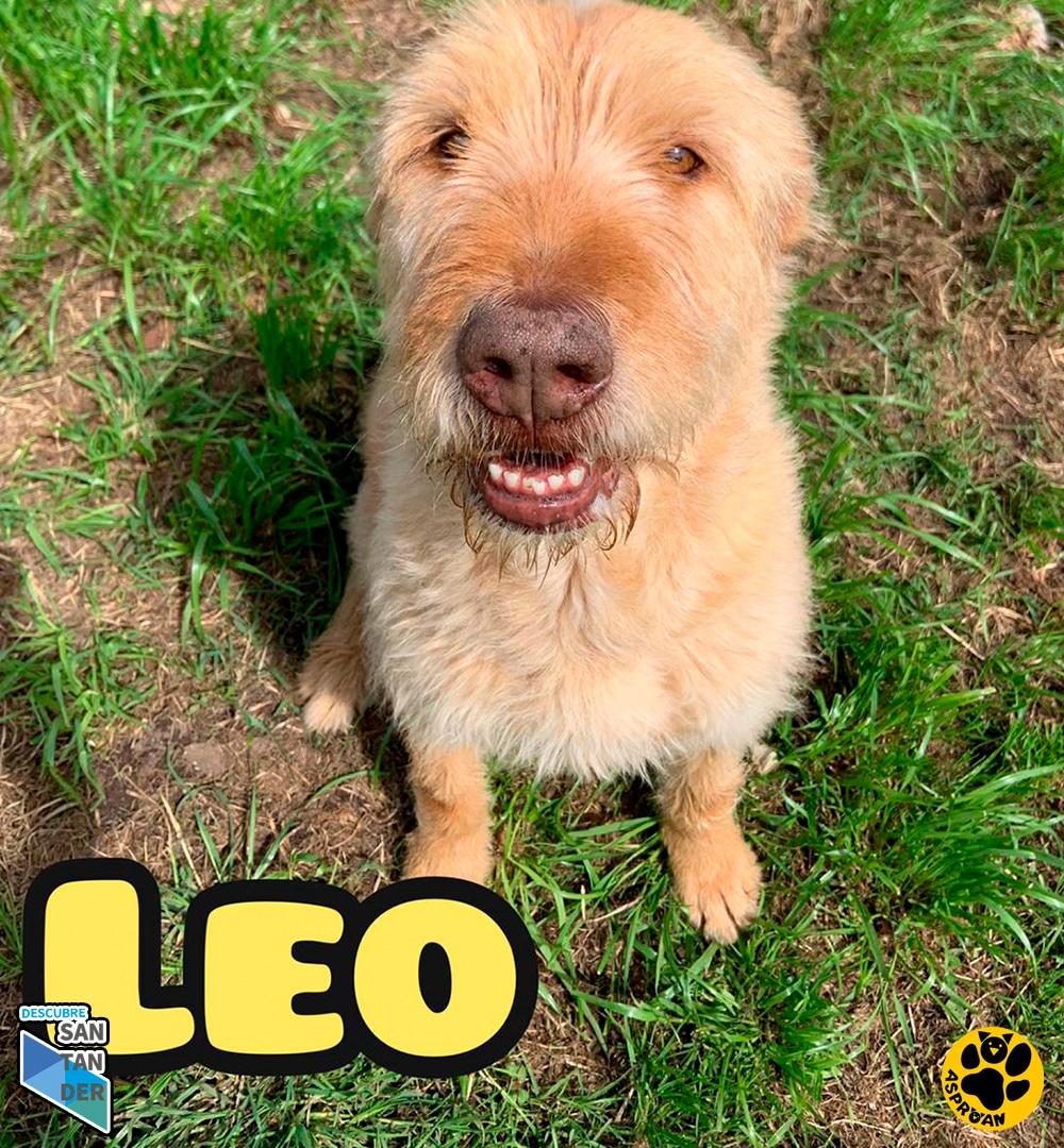 Leo mestizo fila 2