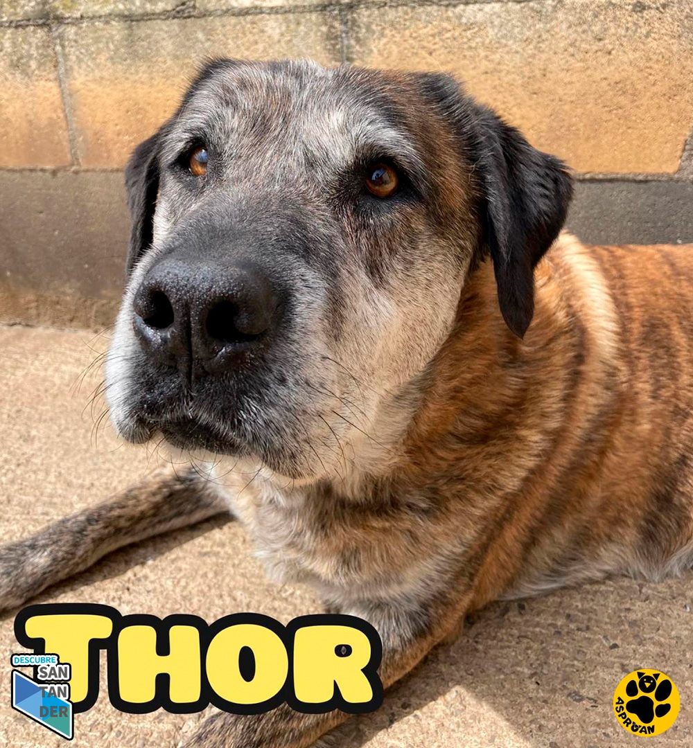 Thor mestizo fila 3